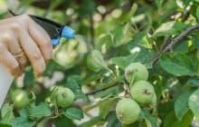Все про весеннюю обработку яблонь