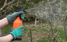 Применение железного купороса для обработки яблонь