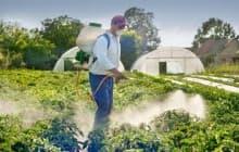 Как удобрять смородину весной для увеличения урожая