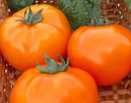 Томат оранжевое чудо описание сорта фото отзывы