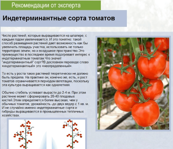 kurs-visokourozhaynoe-virashivanie-tomatov-porno-dima-i-tanya