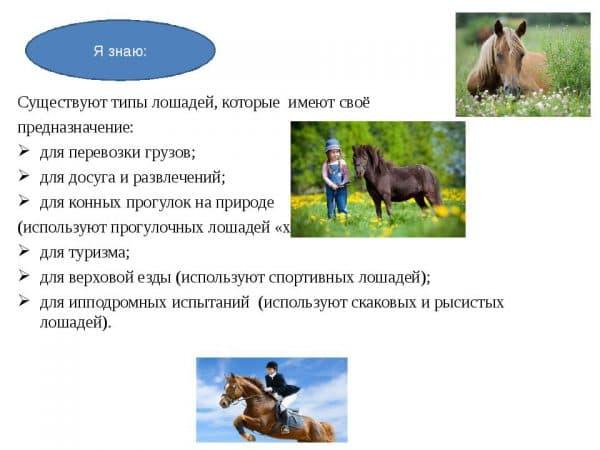 Уход и размножение домашних животных