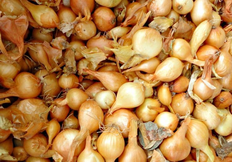 Как сохранить лук севок до весны в домашних условиях