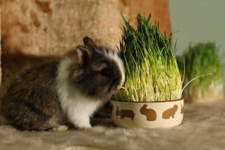 породы кроликов декоративных