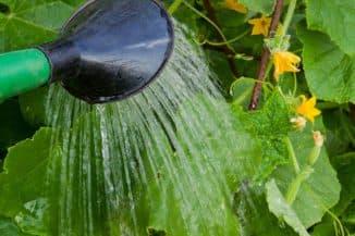 огурцы как поливать