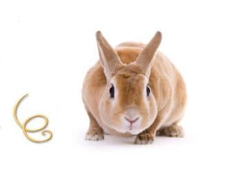 глисты у кроликов