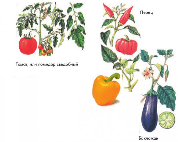 Огородник выращивание овощных культур