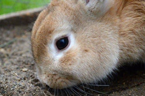 Понос у кролика причины и лечение