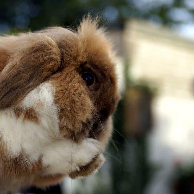 Инфекционный ринит у кроликов описание болезни на сайте Кролиста —  профилактика, симптомы и лечение инфекционного ринита