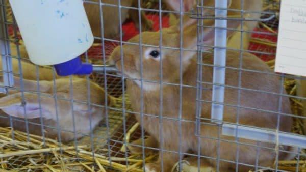 Как сделать поилки для кроликов своими руками