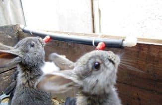 зимние поилки для кроликов