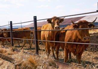 Содержание коров правила затраты особенности