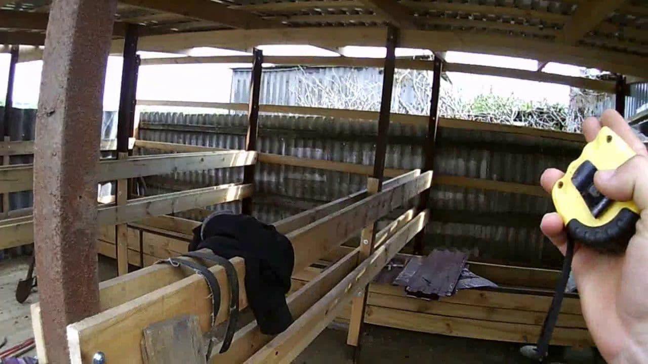 Как привязать быка в стойле