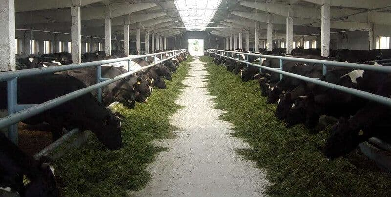 Сарай для коровы своими руками чертежи