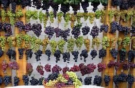 все сорта винограда (раздел)