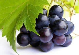 Альфа виноград.