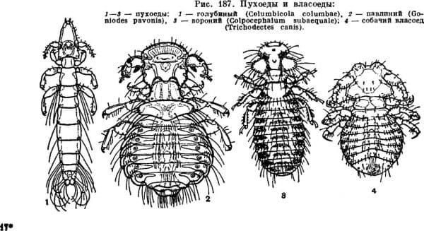 Вирусные и инфекционные болезни кур