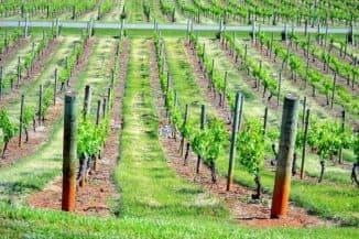 шпалеры для винограда своими руками чертежи