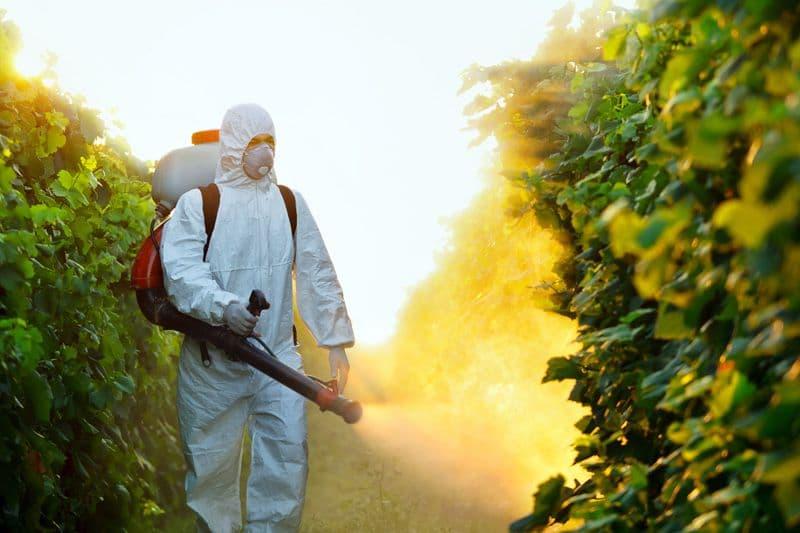 Инструкция по применению фунгицида Фалькон для лечения винограда