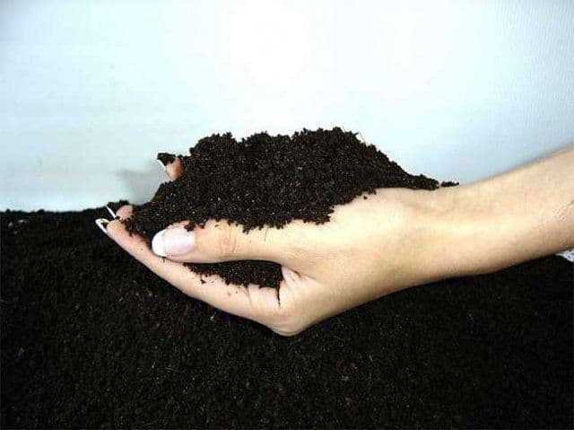 Почва для винограда при посадке саженцев
