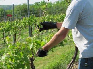 Опора для винограда.