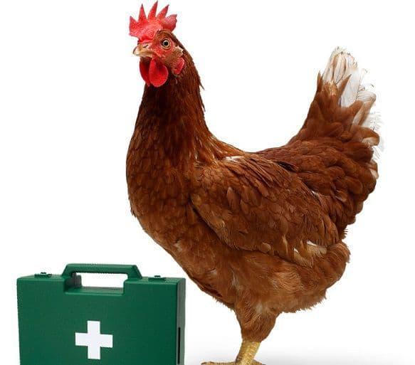 Антибиотики для кур несушек от хрипов