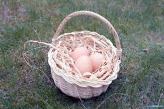 тонкая скорлупа у куриных яиц что делать