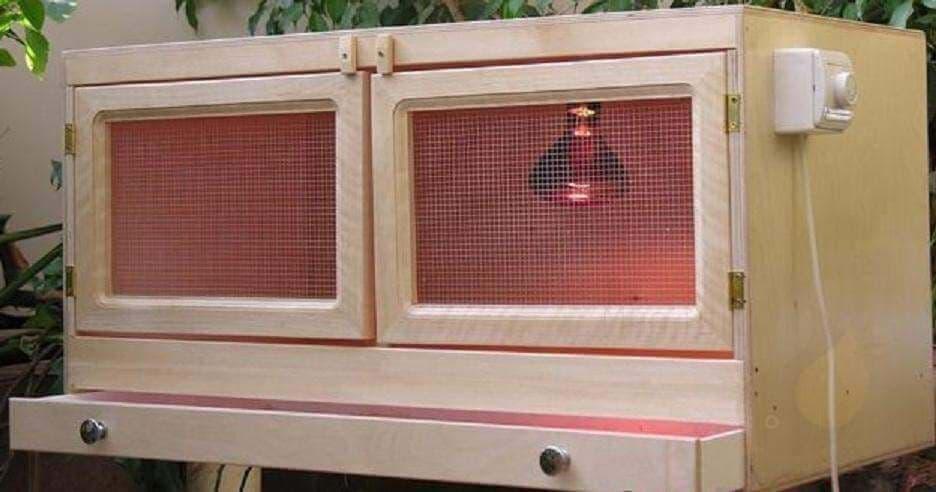 Брудер для перепелов: какая температура в инкубаторе для содержания птиц и как сделать его своими руками, чертежи для этого и где купить