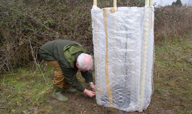 Защита деревьев зимой и весной