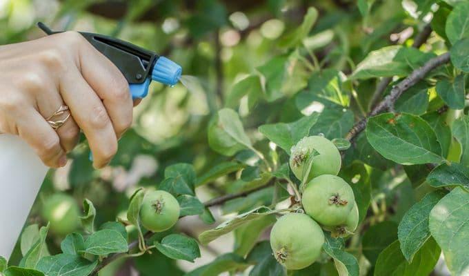 Инструкция по обработке яблони медным купоросом весной