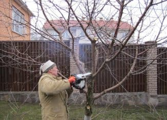 обрезка старой яблони весной