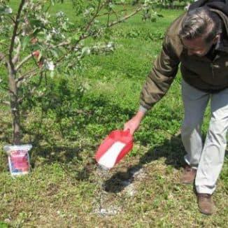 подкормка яблонь весной