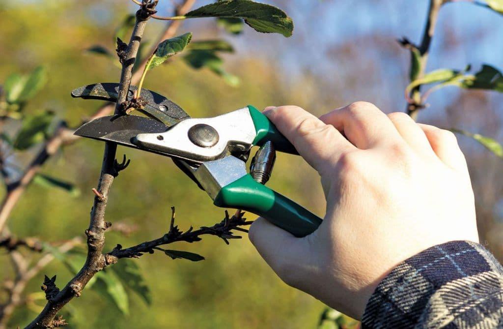 Обрезка яблони осенью для начинающих   формирование кроны