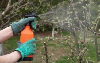 железный купорос применение в садоводстве весной для яблонь