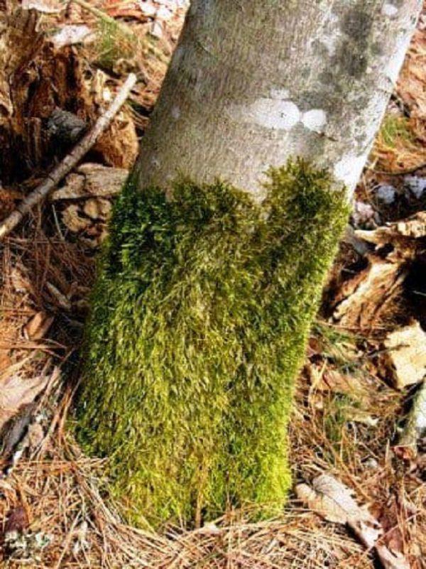Железный купорос применение и весенняя обработка деревьев