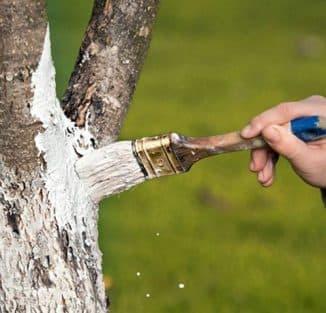 обработка груши весной от вредителей и болезней