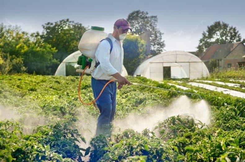 Чем подкормить смородину весной для получения хорошего урожая